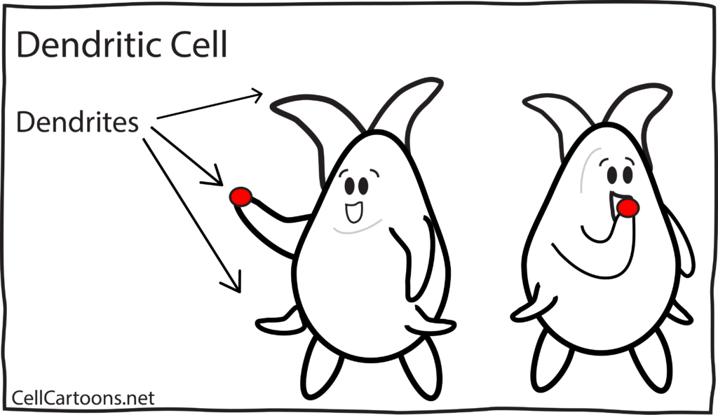 Dendritic Cell Cartoon Immunology