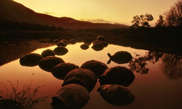 Turtles on galapagos islands