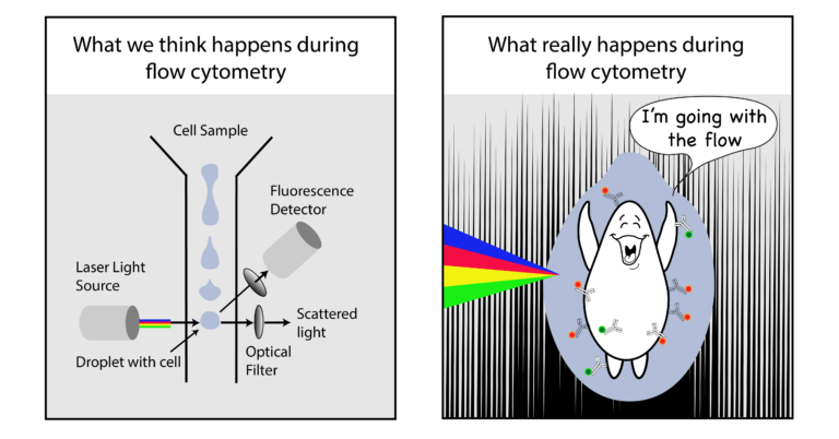 cartoon of a cell going through flow cytometer droplet
