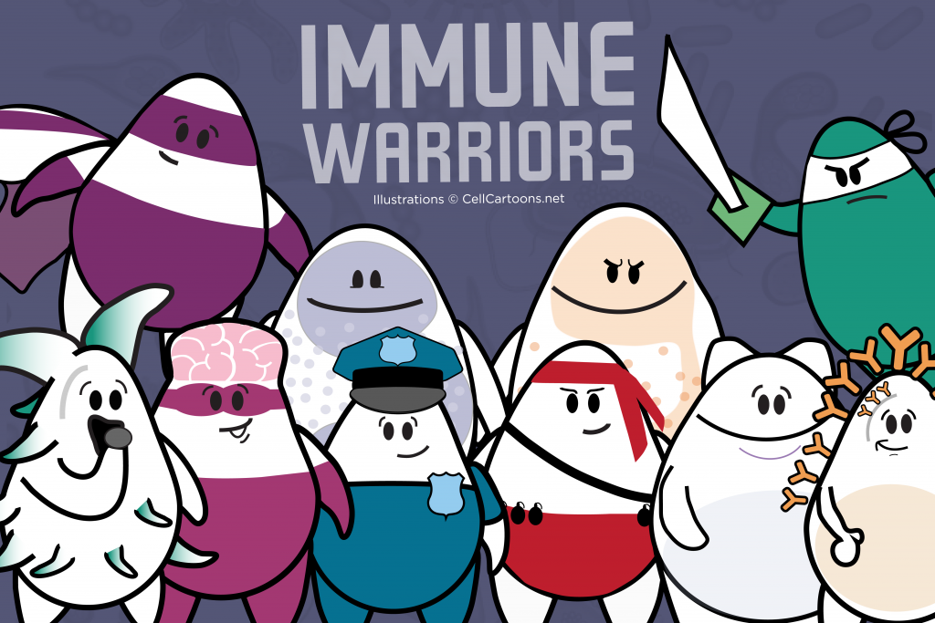 immune cell warriors such as dendritic cell, T cell, B cell, neutrophil and eosinophil