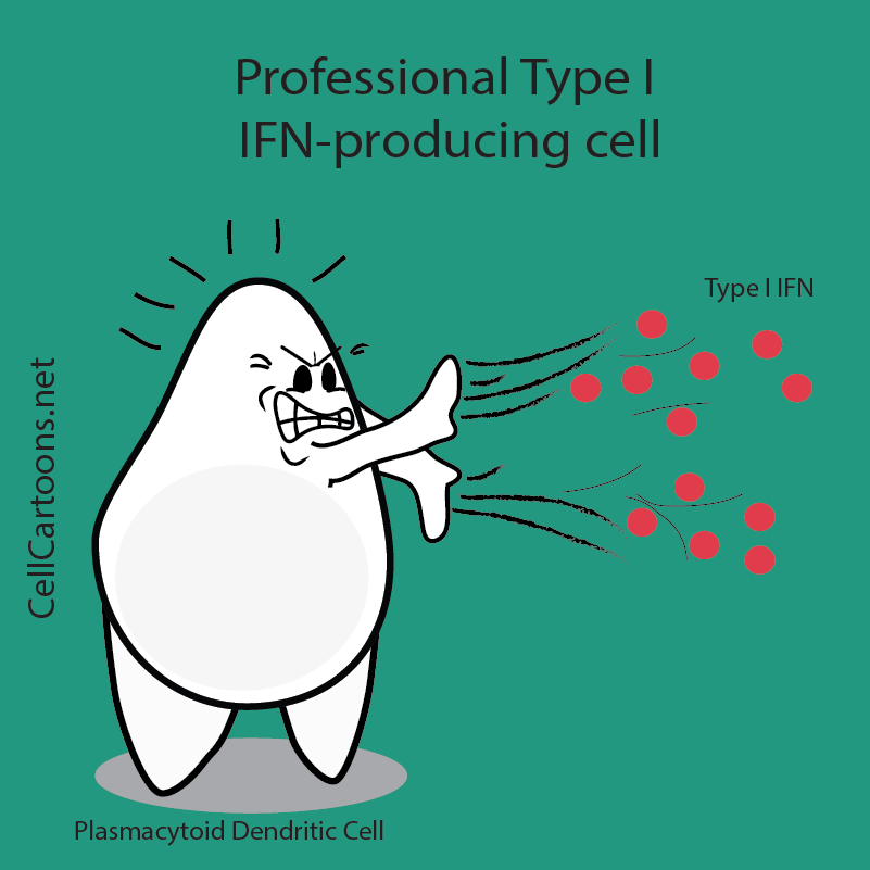 plasmacytoid dendritic cell product IFN cartoon immunology