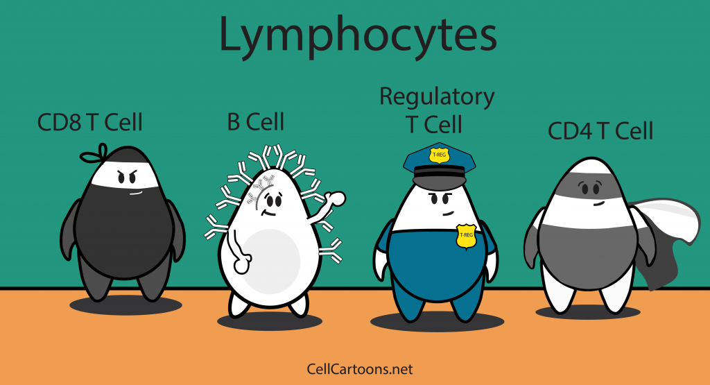 cartoon of immune cells, lymphocytes like t cells, b cells, regulatory t cells