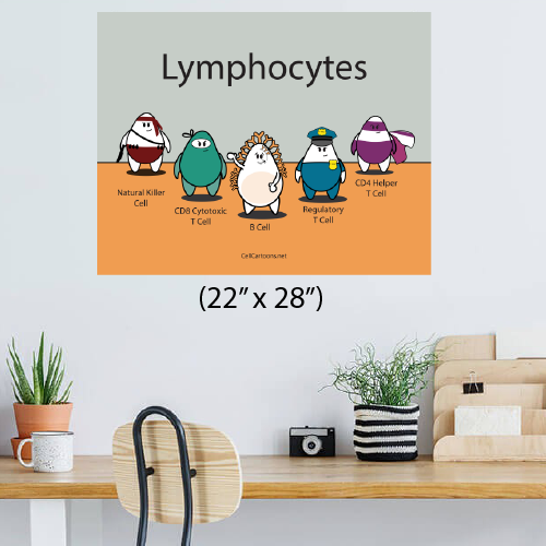Print poster with lymphocytes NK cell, CD8 T cell, B cell, Treg, CD4 T cell