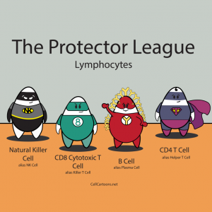 with cartoons representing our own super heroes: natural killer (NK) cell, CD8 T cell, CD4 T cell, and B cell