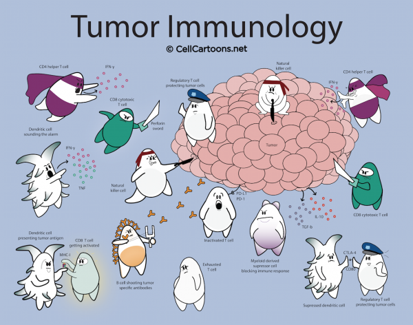 tumor immunology cartoon