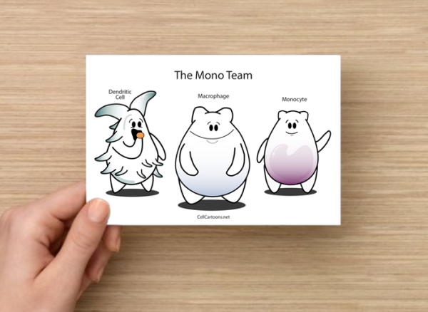 Monocyte, dendritic cell and macrophage postcard