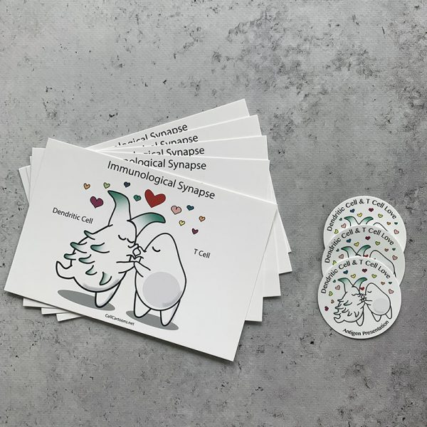 T cell and dendritic cell kissing postcard and sticker